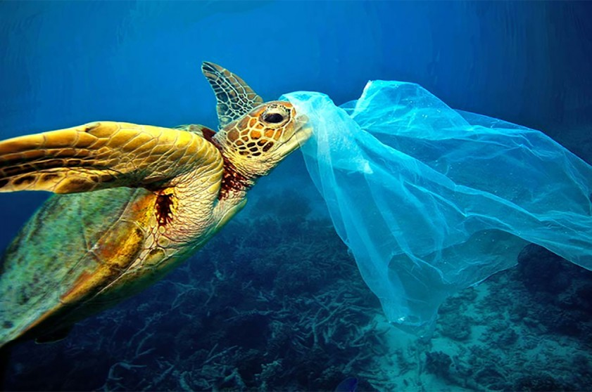 reciclagem sacolas plasticas